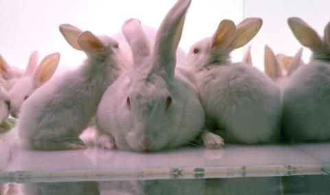 Animal Welfare Information Center (AWIC)