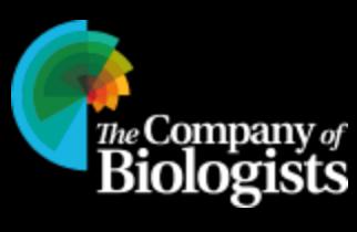 Travelling Fellowships 2021-3 financiadas por The Company of Biologists